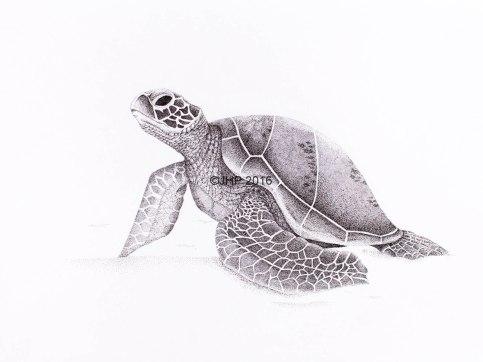 Beach Turtle-2-2