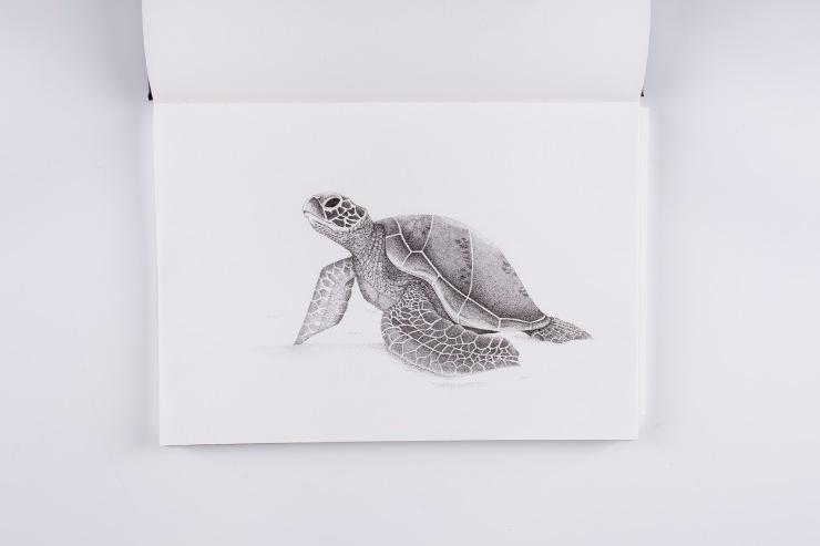 Beach Turtle-2