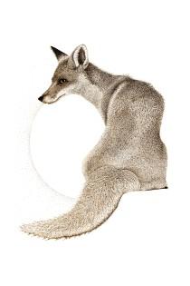 Fox sepia