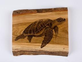 Single Turtle